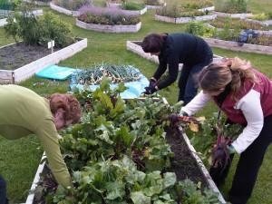 Northern Hills Community Gardens